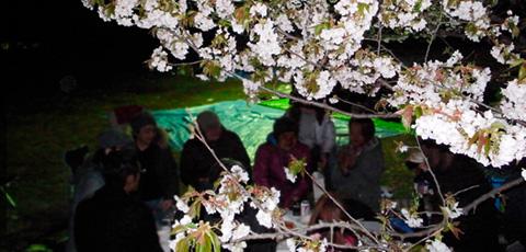 夜桜宴@代々木公園